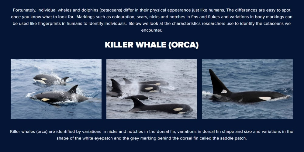 orca conservation Australia