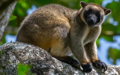Mammals of Far North Queensland: Bizarre, Brassy & Beautiful.