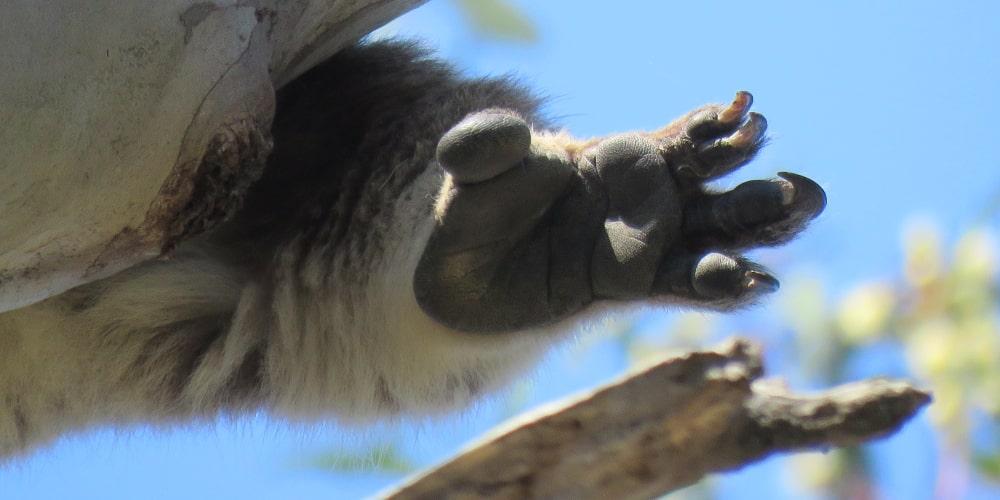 koala feet soles for climbing