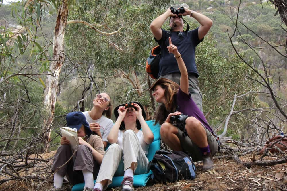 studying koalas in You Yangs Vic