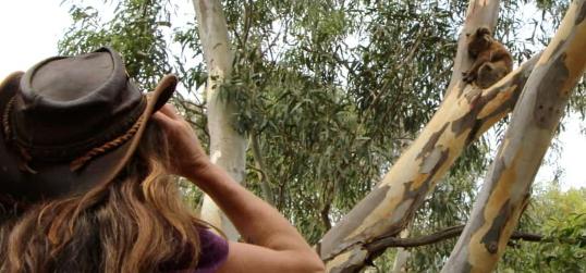 koala researcher