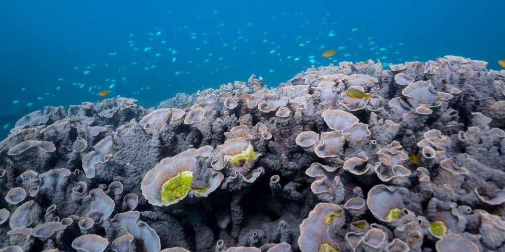 little fish Ningaloo reef