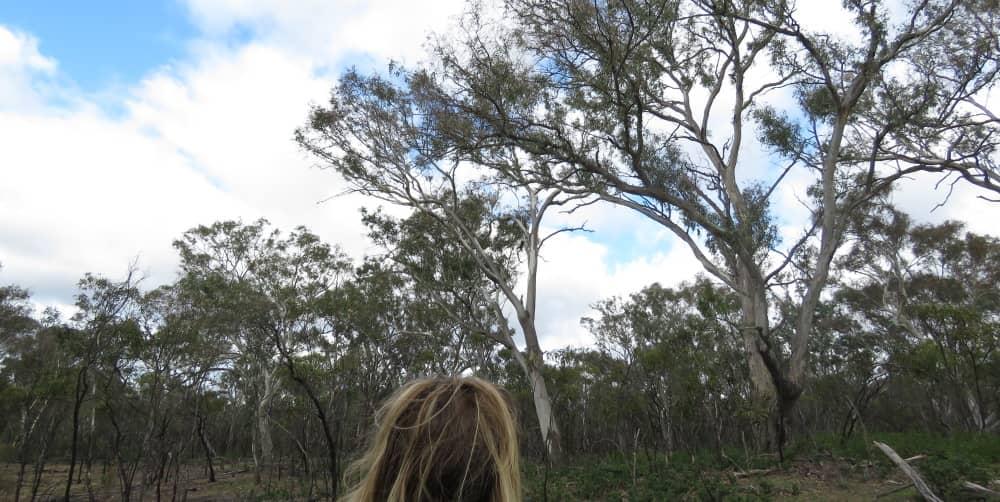 You Yangs koala research 2018