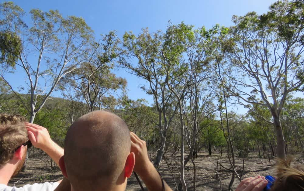 Poor canopy on eucalypts You Yangs 2018