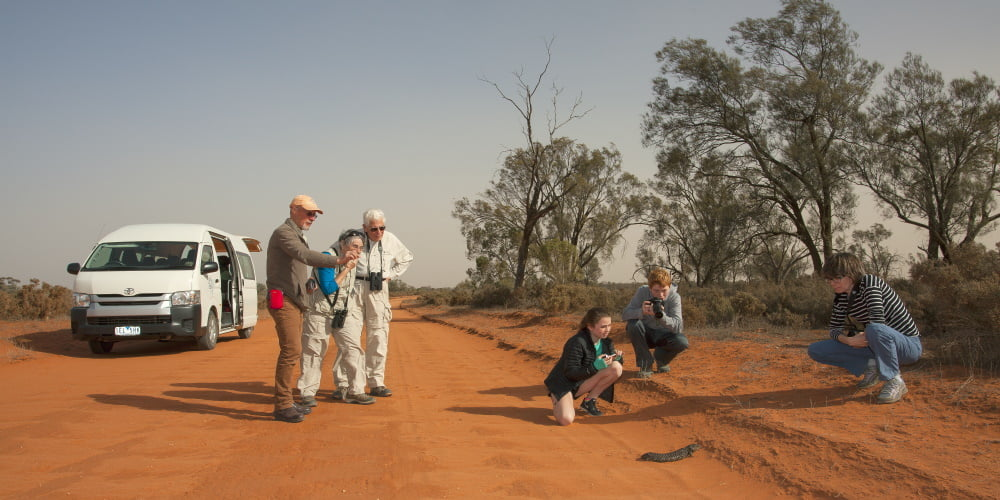 Mungo-Family-on-Road-coast-forests-outback
