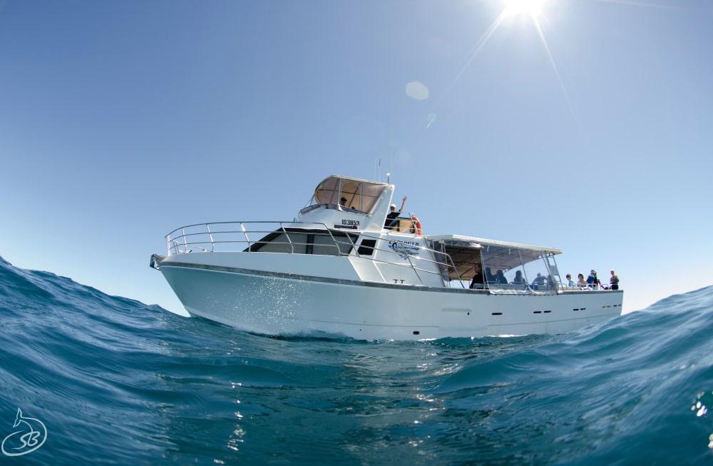 whale shark tour operator