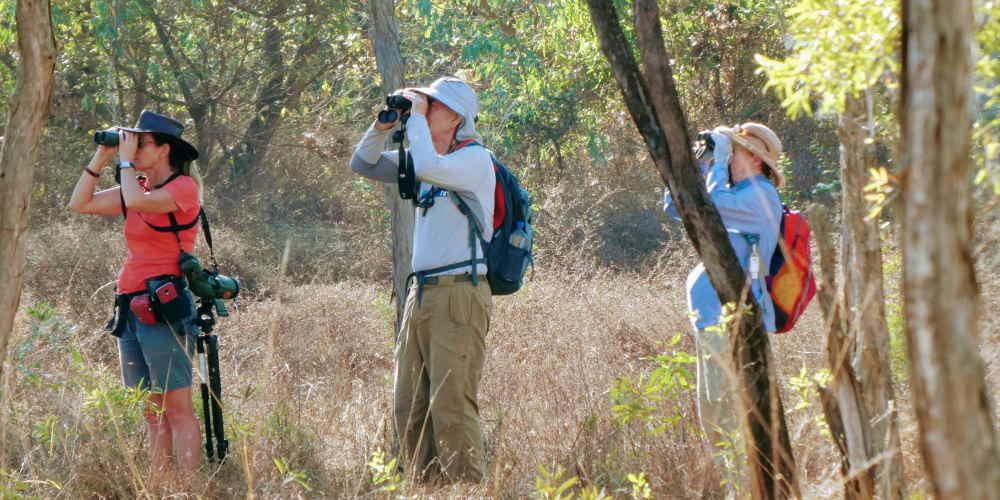 Top End birdwatching