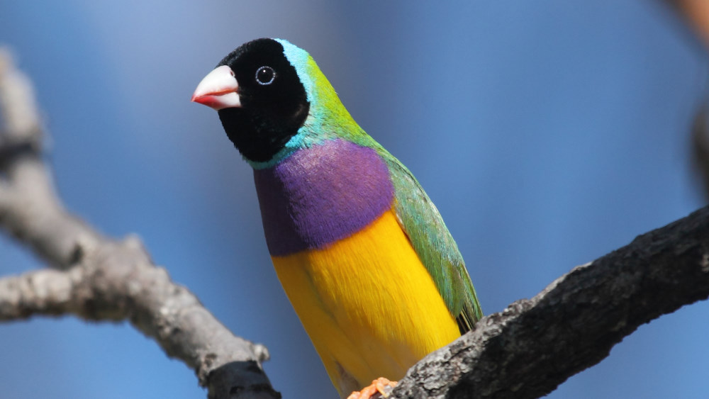 5 reasons to learn birds at the Katherine Bird Festival